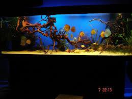 Aquarium Decoration Ideas Freshwater Discus Tank My Dream Fish Tank Pinterest Discus