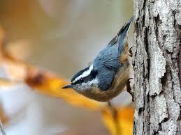 start using spectrograms to u0027read u0027 bird songs and calls audubon