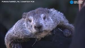 watch groundhog punxsutawney phil u0027s prediction