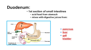 the ins and outs of digestion ppt video online download