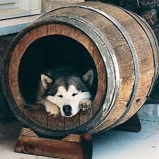 best 25 dog cave ideas on pinterest inside dog houses dog