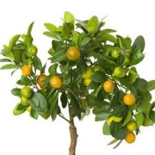 fruit trees for sale buy fruit trees from stark bro s nurseries