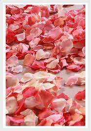 where can i buy petals silk petals freeze dried petals petal garden