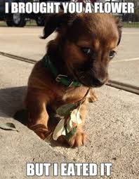 Cute Puppy Memes - top 79 funny and cute puppies memes adsbygoogle window