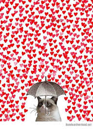 Grumpy Cat Meme Valentines Day - funny valentines day grumpy cat valentines best of the funny meme