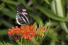 free images nature wing plant white flower fly wildlife