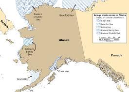 Alaska Population Map by Beluga Whales Noaa Fisheries Alaska Regional Office