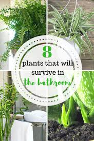 8 plants that will survive in the bathroom house hacks and plants