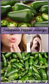 jalapeno pepper allergy allergy symptoms org