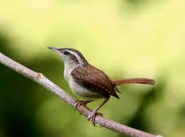 bird attracting native plants attracting backyard birds creating habitat for wildlife barn