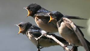 Nj Backyard Birds by Bird Id Skills How To Learn Bird Songs And Calls All About Birds