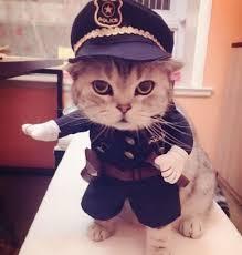 Neko Halloween Costume 25 Cat Costumes Ideas Cute Cat Costumes