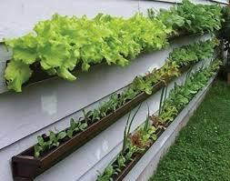 Container Vegetable Gardening Ideas Nonsensical Container Vegetable Gardening Ideas Stunning Ideas