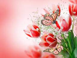 pink butterfly and tulip flowers wallpaper hd desktop background