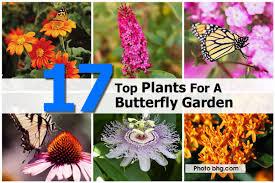 making a butterfly garden best idea garden