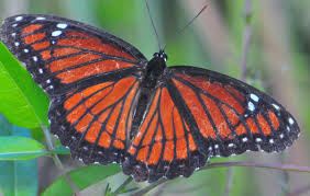 create a backyard butterfly garden alan s hochman photography