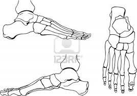 skeleboner spirit halloween foot bones stock photo 13814389 foot anatomy studies