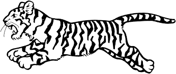tiger clipart printable pencil and in color tiger clipart printable