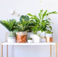 indoor plants nz interior styling with plants mocka nz blog