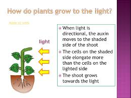 How Does Gravity Light Work 7 2 Tropic Responses Plants Grow Towards Or Away From Stimuli