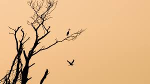 Minimalism Images images of minimalist bird wallpaper by sc