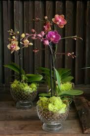 58 best garden orchids saprophytes images on pinterest plants