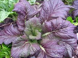 vegetable garden hillsborough extension garden blog