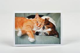 sympathy cards for pets sympathy card 3rb pet sympathy cards pets at rest limited
