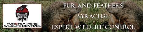 bat exclusion u0026 control company in syracuse new york bat removal pro