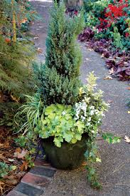 native plants for pots festive fall and winter containers state by state gardening web