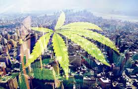 newest the growing market a look into new york u0027s newest mmj dispensary