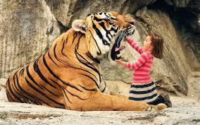 colorful tiger wallpaper