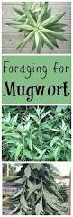 native edible plants best 25 edible plants ideas on pinterest edible wild plants