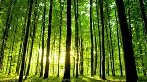how many trees are there left on earth more than 3 trillion finds