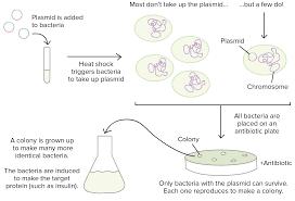 genetic variation in prokaryotes article khan academy