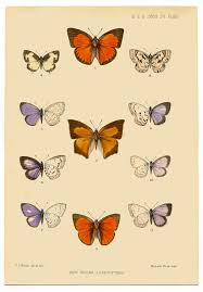 instant printable art antique butterfly the graphics fairy
