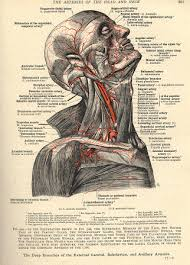 Human Anatomy Careers Anatomy And Physiology For Massage Therapists Nursing