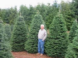 artificial christmas trees noble fir and this 9 ft empire fir