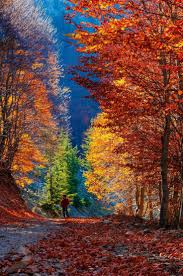 Fall Autumn by Best 20 Autumn Scenery Ideas On Pinterest Fall Scenery Pictures