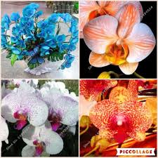 indoor orchids promotion shop for promotional indoor orchids on