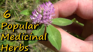 native american plants used for healing 6 popular medicinal plants u0026 herbs youtube