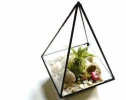 small geometric terrarium air plant glass terrarium glass