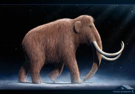 mammuthus woolly mammoth facts pictures