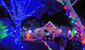 Singing Christmas Tree Lights Winter Lights At Nc Arboretum