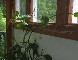 Garden Trellis Netting Trellis Netting For Smart Gardeners Supports Tomatoes Vegetables