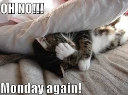 Monday Cat Meme - cat memes 25 ways to laugh cattime