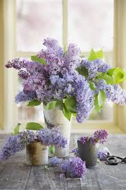 Lilca by 12 Facts Every Lilac Lover Should Know Purple Lilac Country