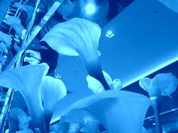blue lilies blue lilies by hns135 on deviantart