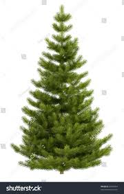 christmas tree isolated on white background stock illustration