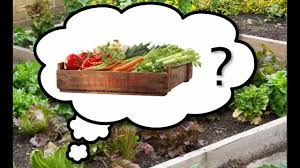 try ad free for months the best vegetables to grow in your garden
